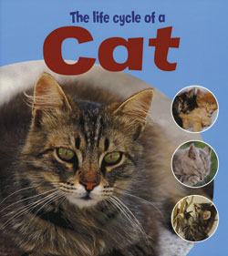 The Life Cycle of a Cat | Rosen Publishing